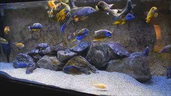 Ссылка на: Изготовление аквариумов на заказ под ключ с запуском