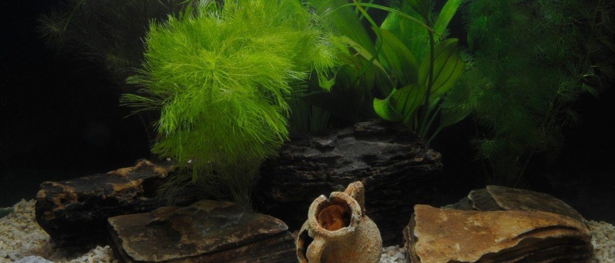 Ссылка на: Оформление аквариума, дизайн с выездом к заказчику